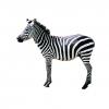 1_zebra.jpg